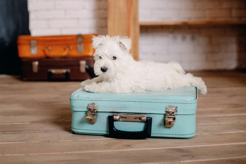 Kaj vse sodi v pasji kovček?