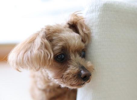 Kako vemo, da psu peša vid?