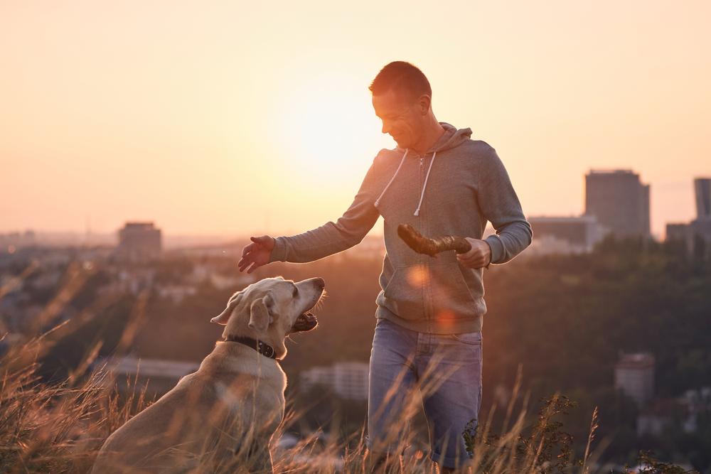 Pes se ob dobrovoljnem skrbniku hitreje uči