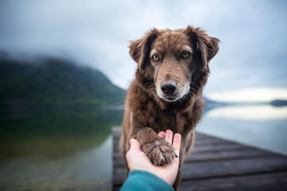 Raziskava dokazala, da pes želi rešiti svojega človeka