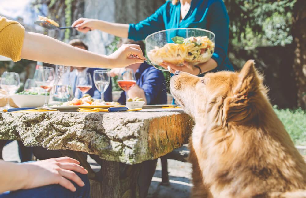 Nevarnosti, ki jih za psa prinaša piknik