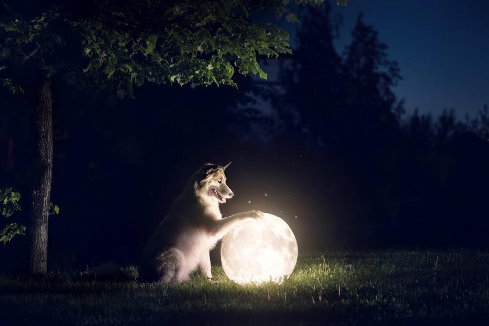 Polna luna in pogostost ugrizov
