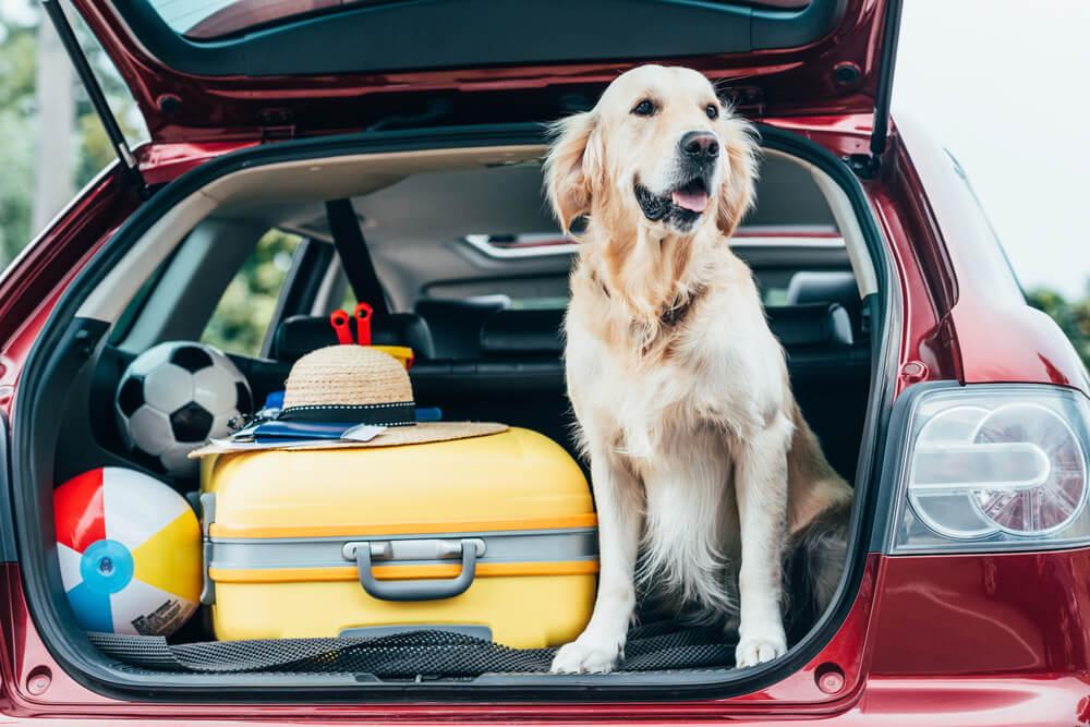 11 nasvetov za potovanje s psom