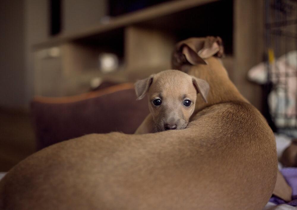 Rešena psička Jasmine 'posvojila' več kot 50 živali