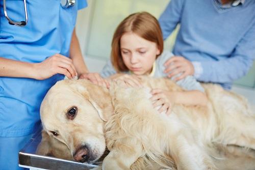 Kakšni so simptomi klopno prenosljivih bolezni