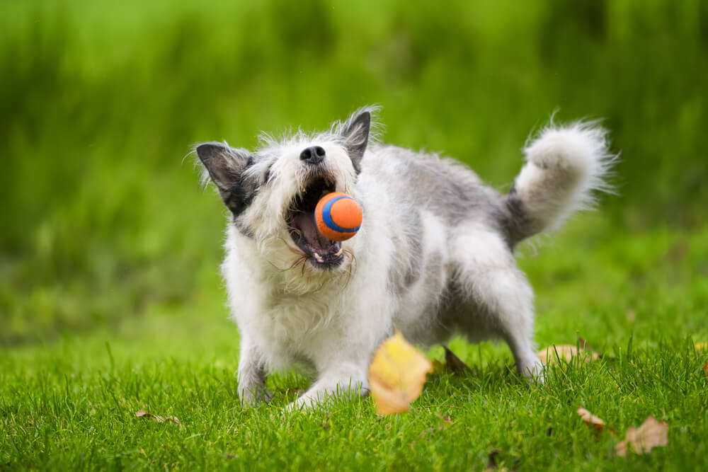 Tudi star pes se lahko nauči novih trikov