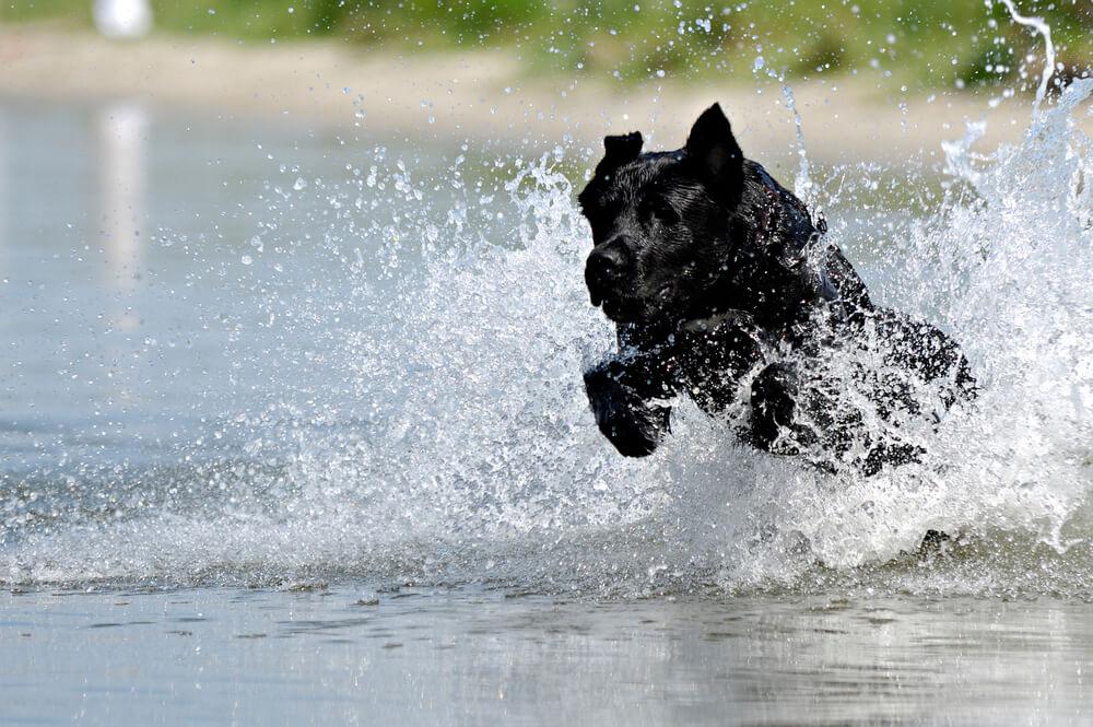 Kuža Swansea Jack v svojem življenju iz vode rešil kar 29 ljudi