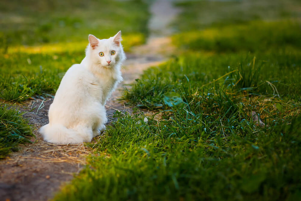 Zastrupitve pri mačkah: predvsem posledica škropiv