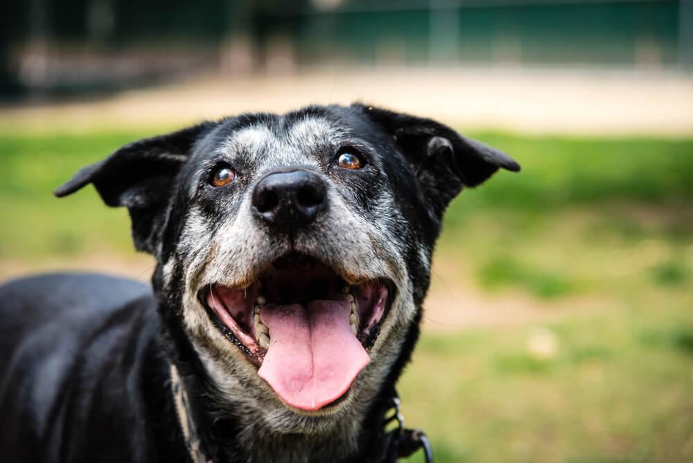 Zdravljenje in preprečevanje demence pri psih
