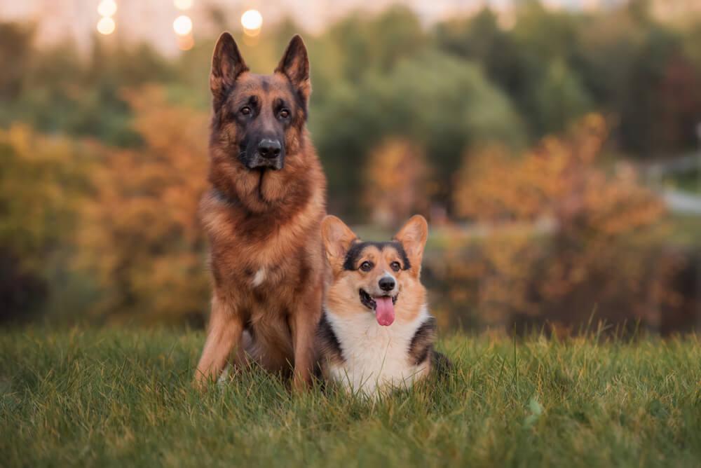 Število psov v Sloveniji narašča, največ je mešancev