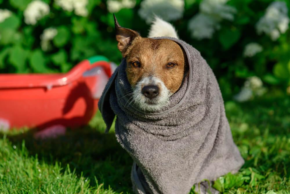 Nasvet: kako ohladiti psa?