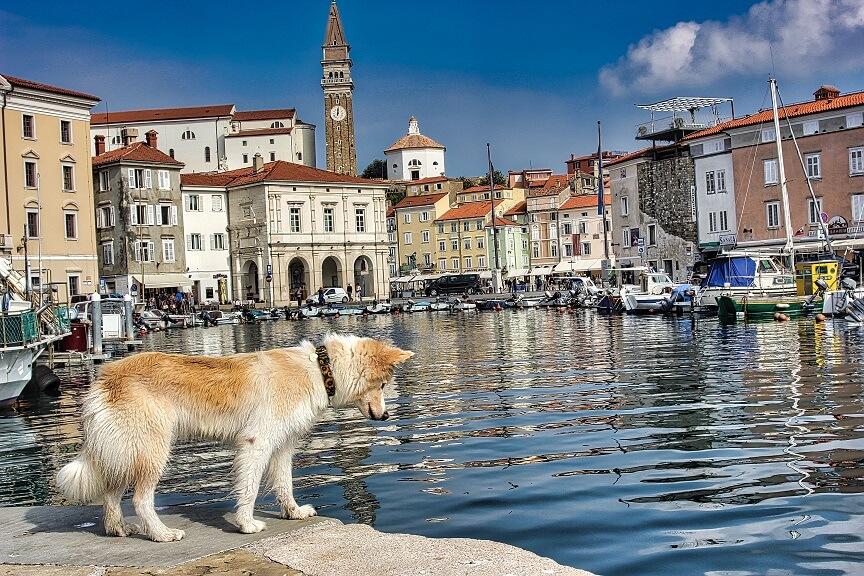 S psom na sprehod: senčne poti Pirana