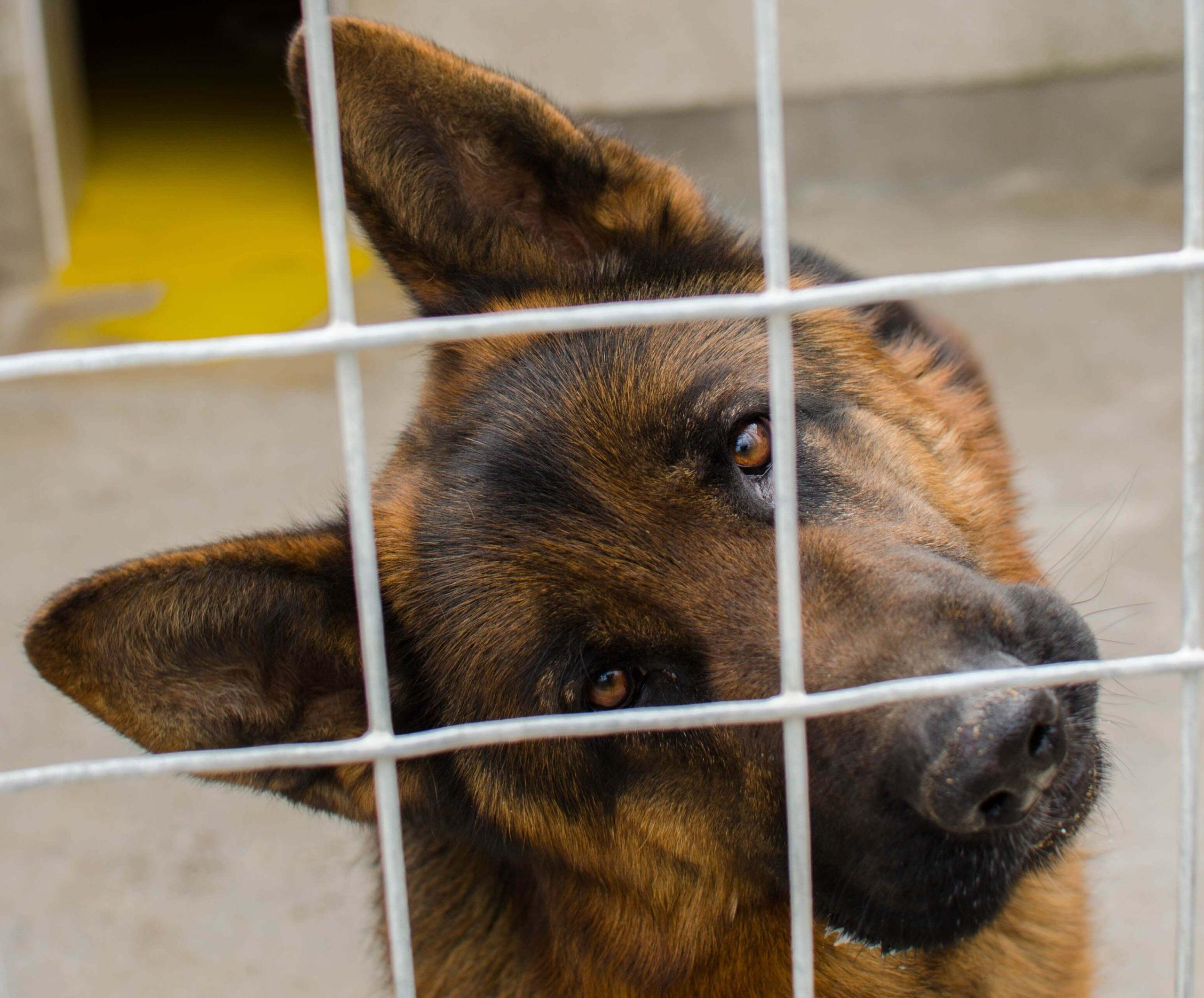 Prošnje za oddajo psa v zavetišče poleti kar dežujejo
