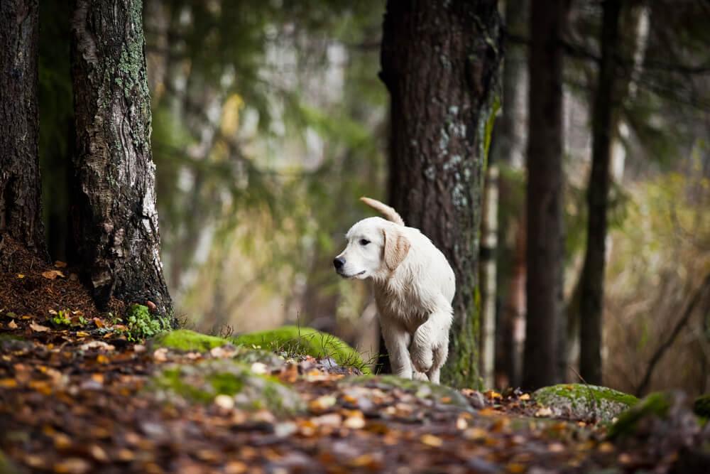 Gozdne nevarnosti za našega psa