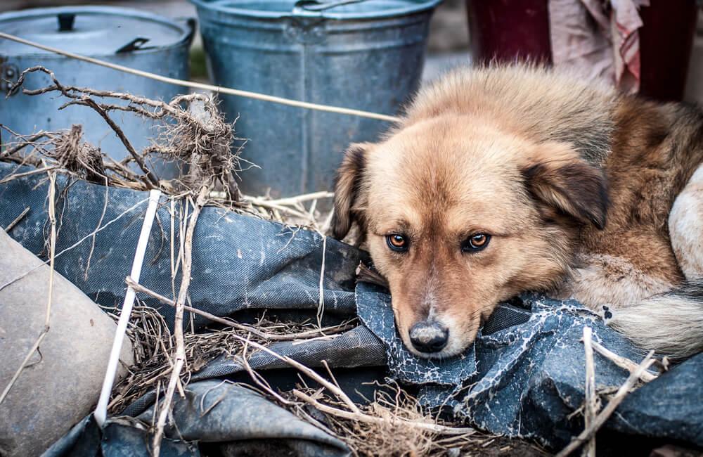 Kruti lastniki resno bolnega kužka vrgli v smetnjak