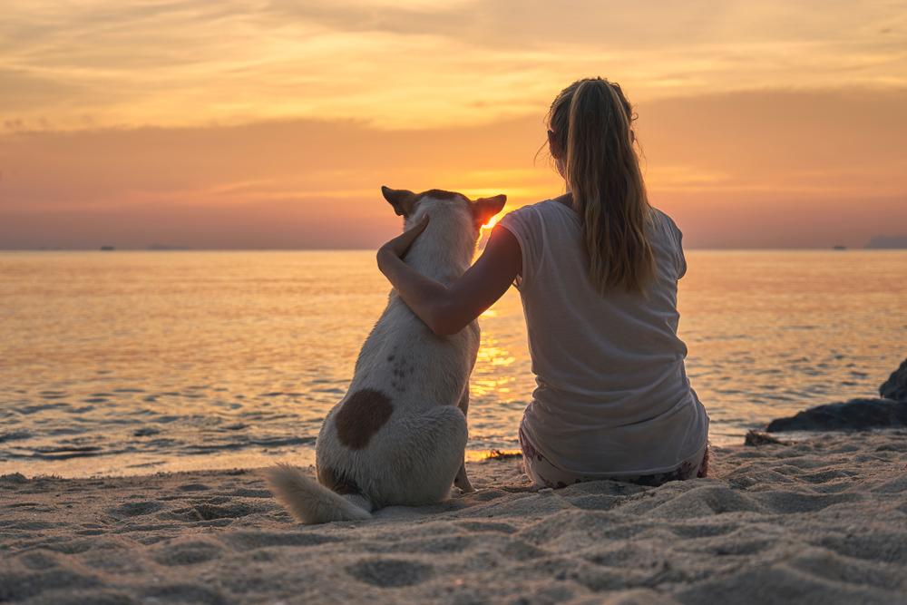 'Zaznavamo več zahtev po pasjih plažah, pa tudi po prepovedi psov'