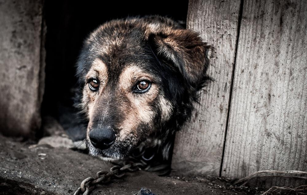 Psi na verigah in v boksih – obsojeni na zločin, ki ga niso nikoli storili