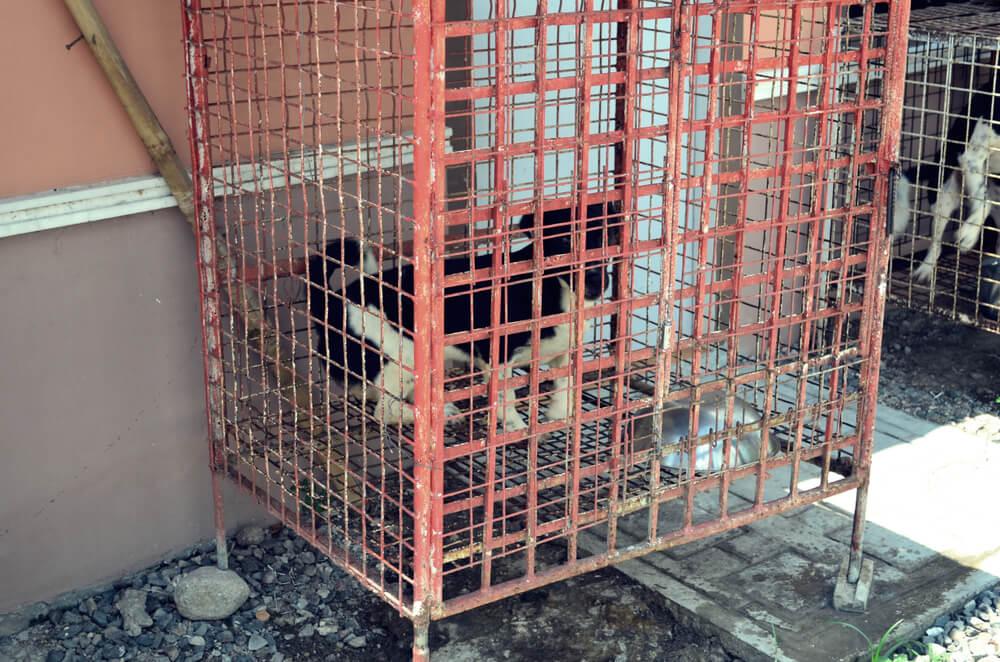 Z ameriške 'posesti pekla' rešili več kot 100 psov