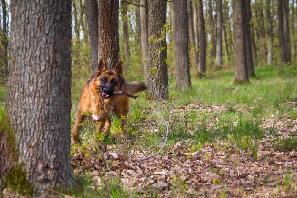 Psa na Pokljuki jamarji rešili iz 8-metrskega brezna