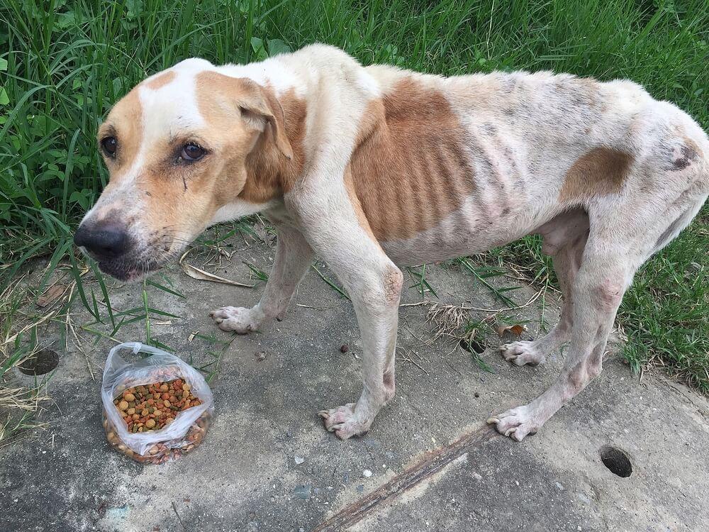 Moški tako zanemarjal in stradal psa, da sta se tepla za hrano