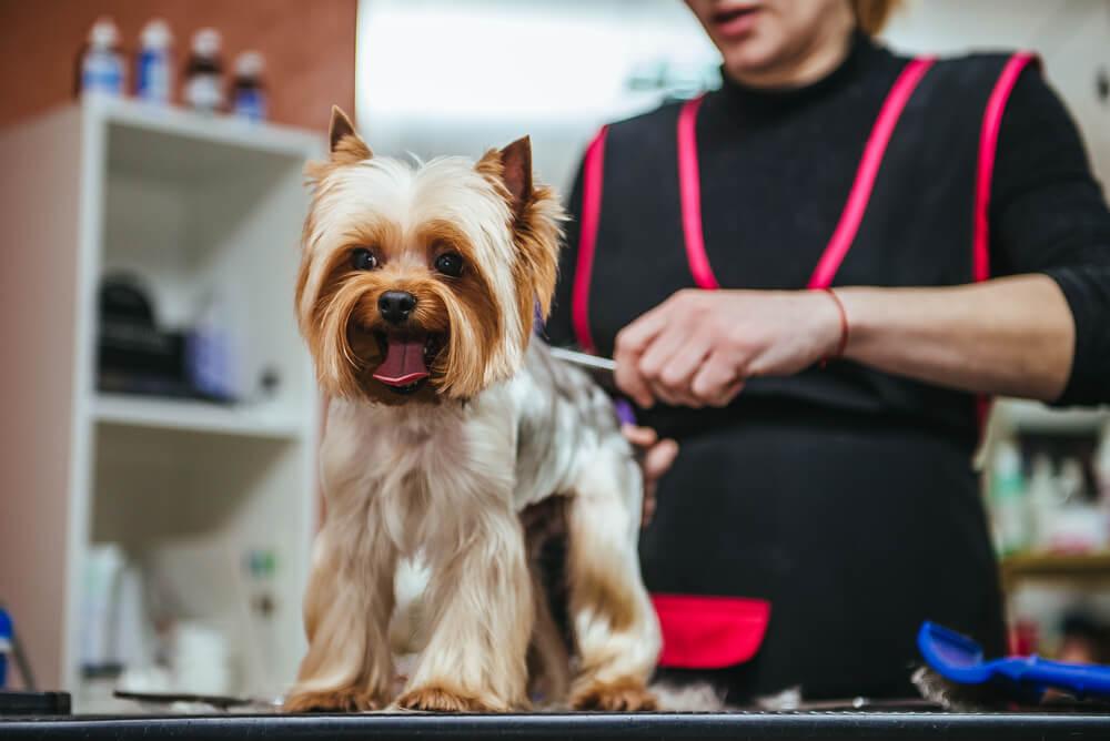 Ali poletno striženje res pomaga, da je psu manj vroče?