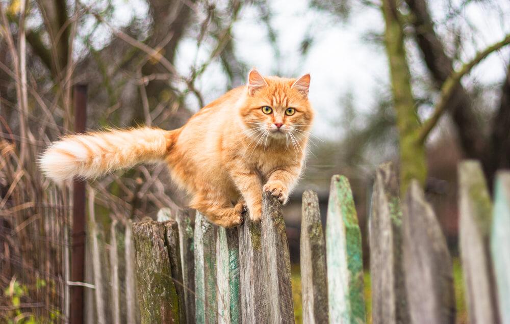 Življenje zunanjih mačk: svoboda, ki se prehitro konča