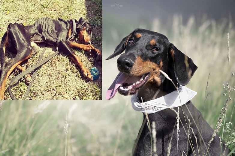 Ranljiva psička Gaja v svojem mladem življenju kar dvakrat pristala v zavetišču