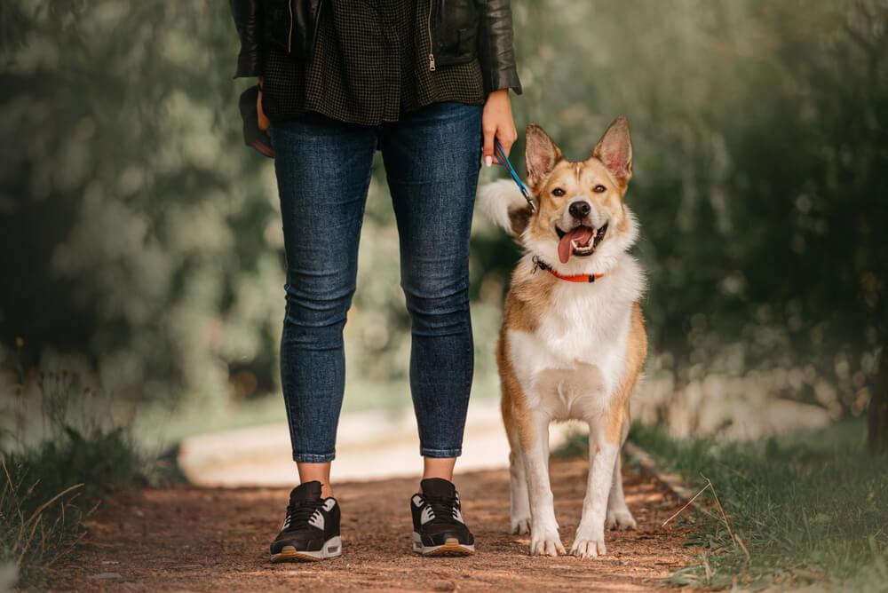 Zakon v Nemčiji: ''Bolje, kot obvezni sprehodi, bi bili obvezni tečaji za skrbnike psov''