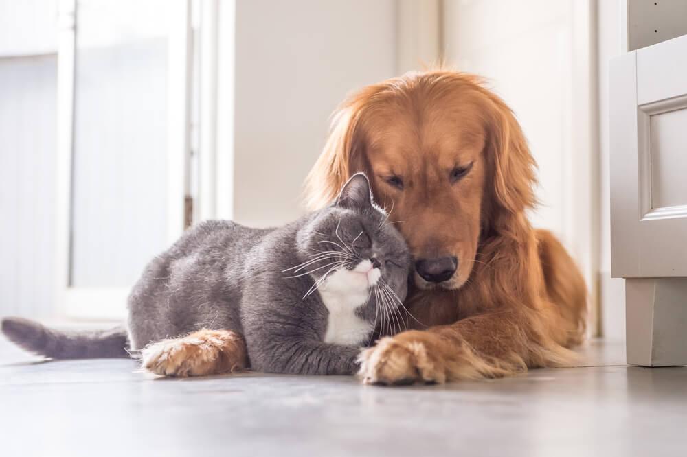 Prijetni feromoni za boljše sobivanje psov in mačk