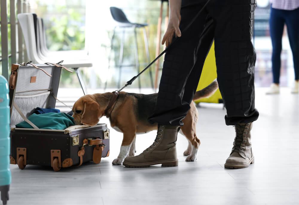 Kuža Aki poleti na frankfurtskem letališču zavohal ogromno umazanega denarja