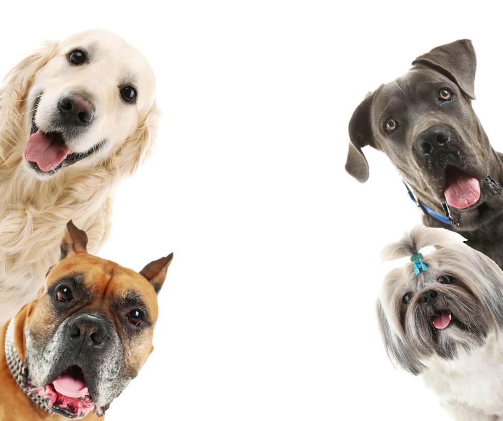 Deset muzejev po svetu, ki so posvečeni psom