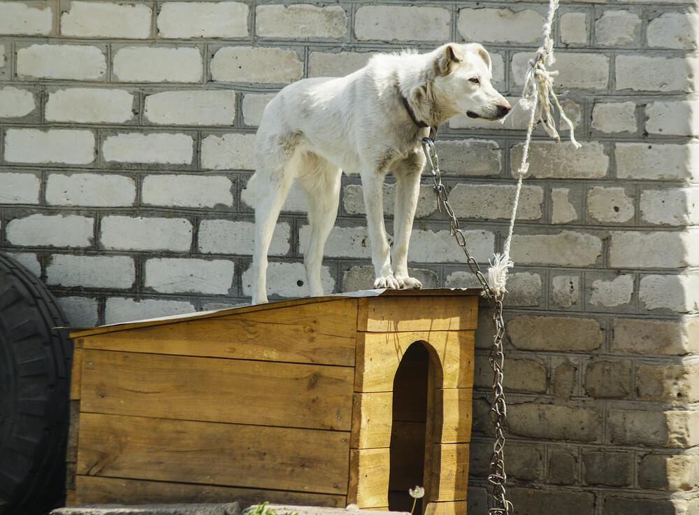 Družina se je preselila, ostarelo psičko Atheno pa pustila na težki verigi