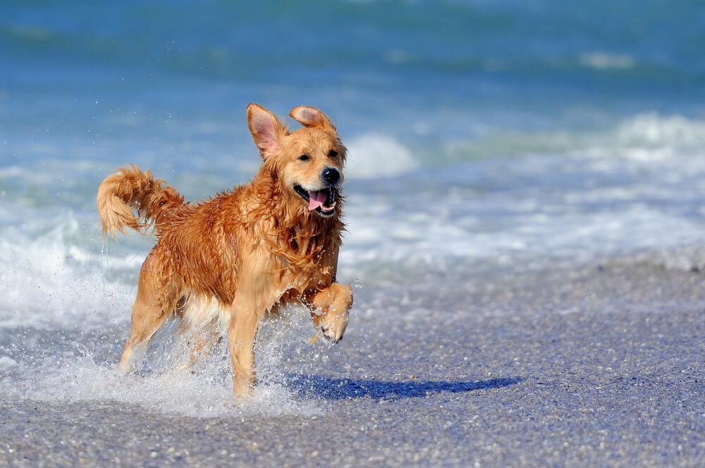 Pritožbe obiskovalcev pasje plaže v Izoli