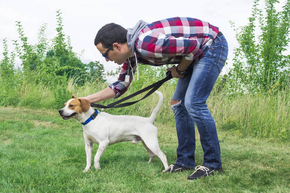 Če psa hvalimo vsevprek, pohvala izgublja pomen