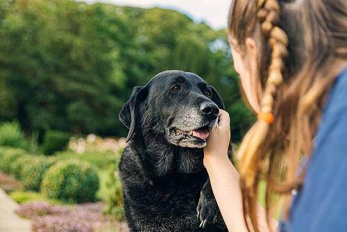 Posvojena deklica za pasje seniorčke zbrala že 12.000 evrov