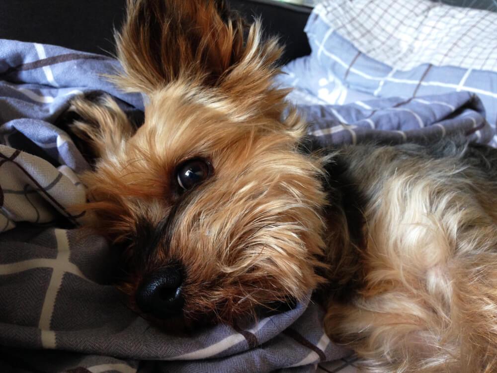 Zapuščena psička Jeanie izgubila tačko, prebolela raka, danes pa kot terapevtski pes riše nasmehe