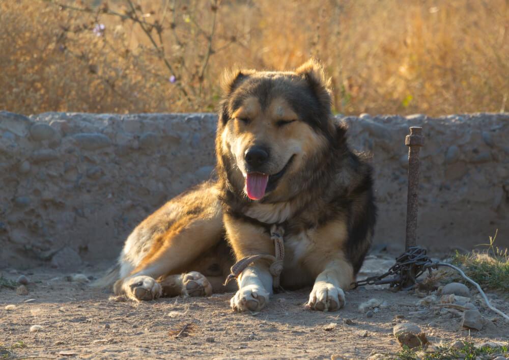 'Pekel na Zemlji' ali kako se psi na verigi počutijo poleti