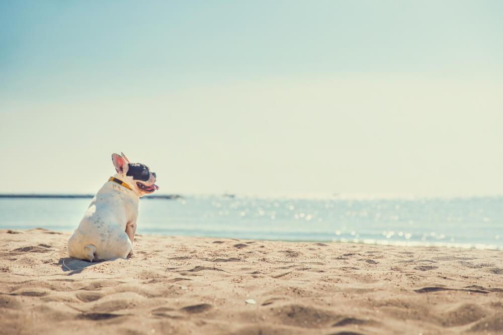 Zakaj na večini slovenskih plaž psi niso dobrodošli?