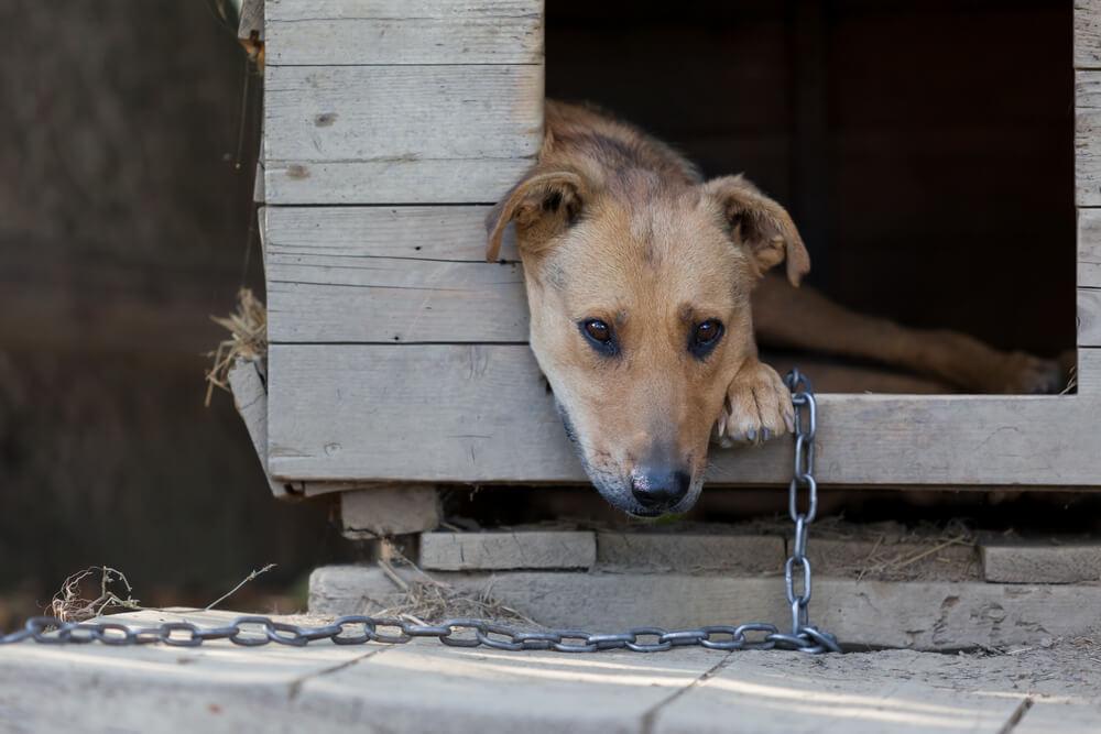 Po novem zakonu bodo morali Nemci sprehajati psa vsaj 2 uri na dan, prepovedane tudi verige