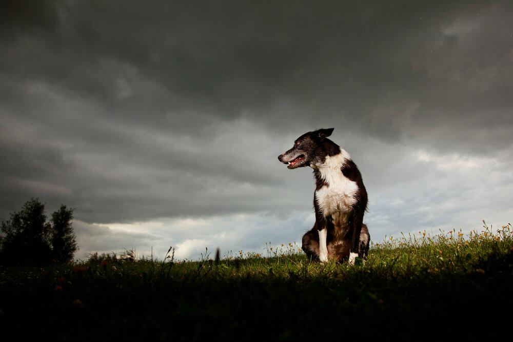 Strah pred nevihtami: pomagajo naravni preparati in tudi zdravila
