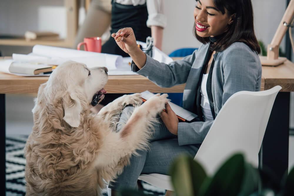 Podjetje posvojilo in zaposlilo uličnega psa za pozdravljanje in sprejemanje strank