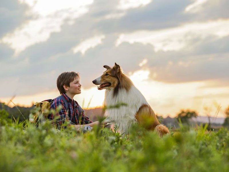 Lassie zopet na filmskih platnih