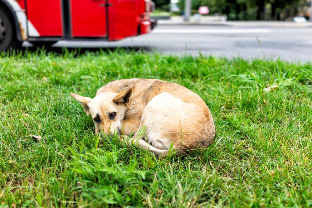 V Šebreljah do smrti obstrelili psa mešančka