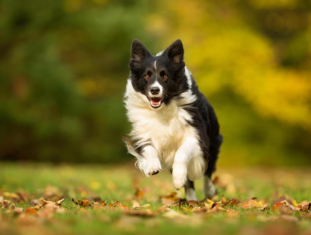 Dejavniki, ki vplivajo na impulzivnost psa