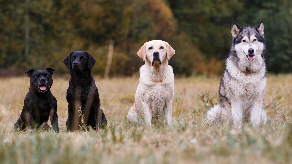 Kako izbrati pravega psa za naše življenje?