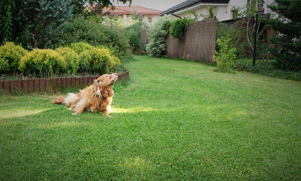 Opravljanje potrebe na vrtu