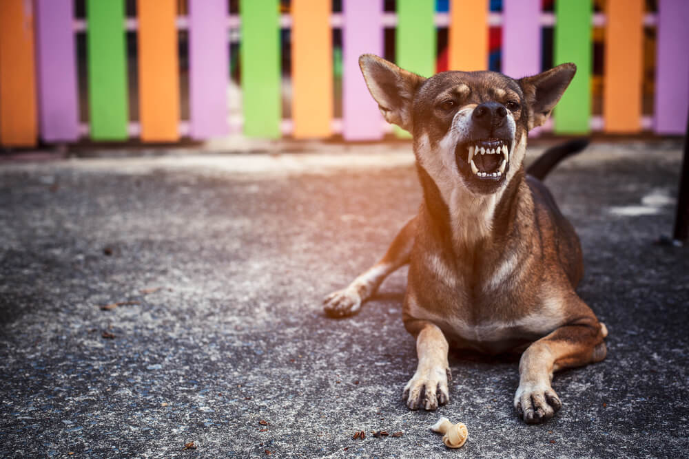 Kako se kažejo opozorilni znaki pri psu?
