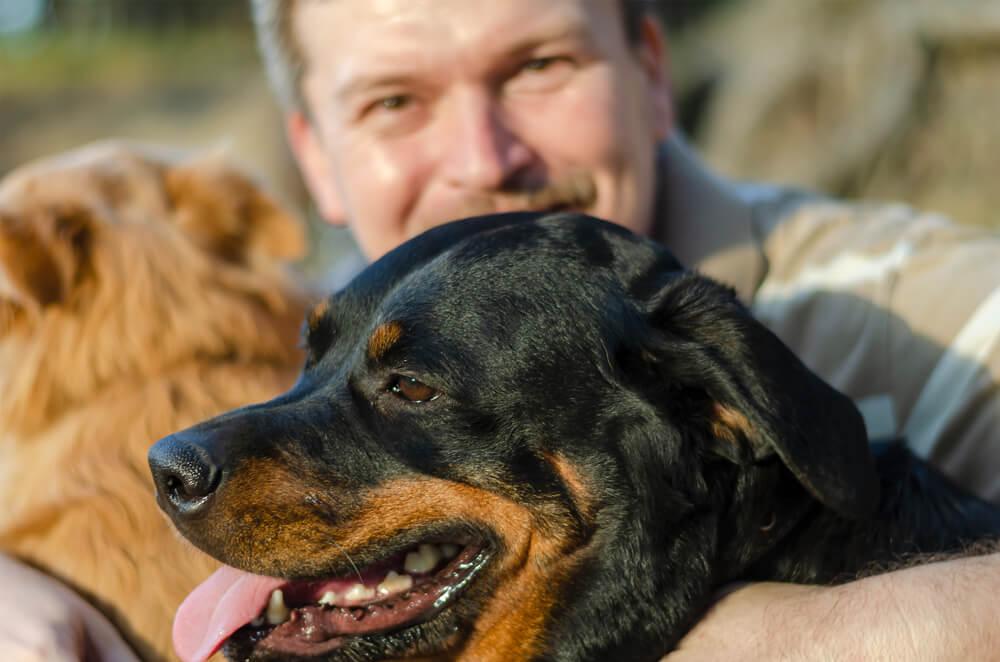 Psa skočila na roparja in rešila svojega človeka