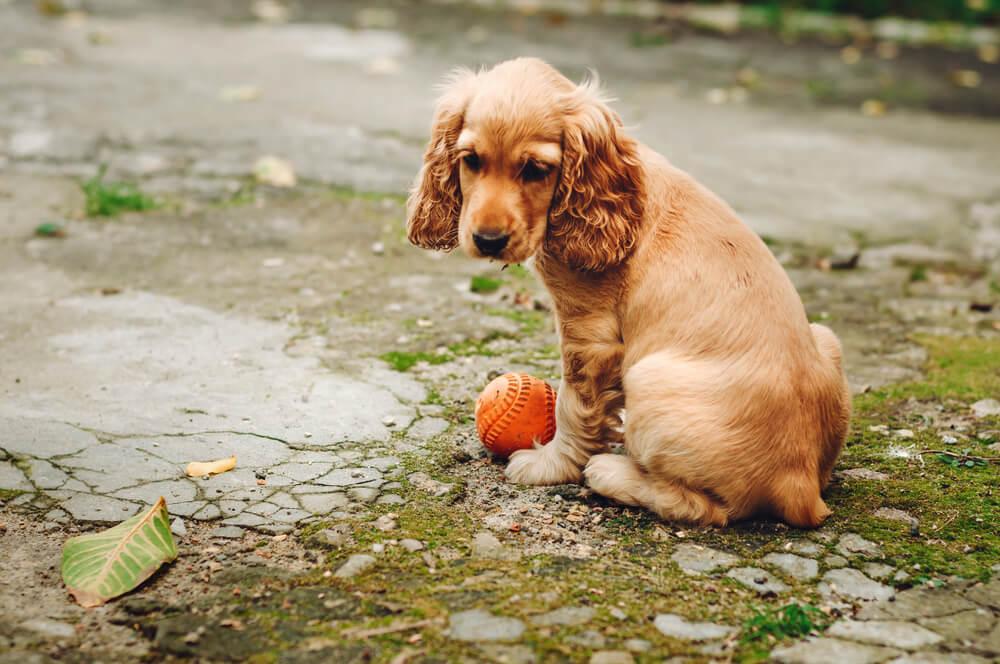 Za pretepanje psa v javnosti dobil kazen: 150 ur prostovoljnega dela