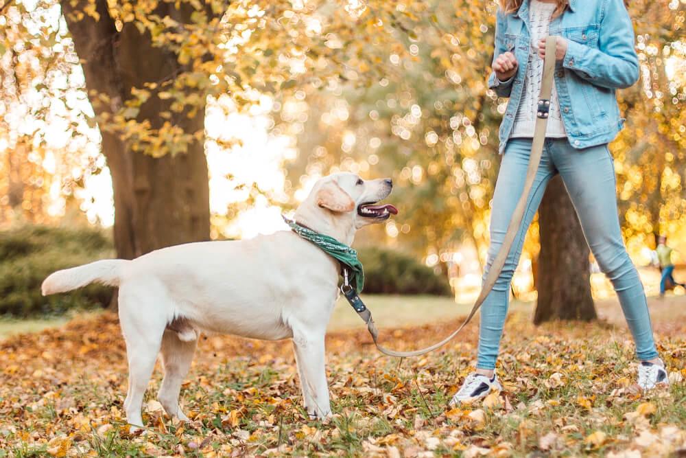 4 razlogi, zakaj se je sili in grobosti pri vzgoji psa treba izogniti